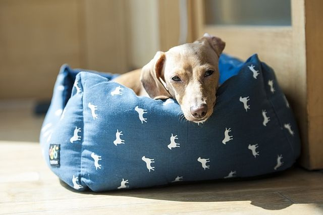 best-memory-foam-dog-beds
