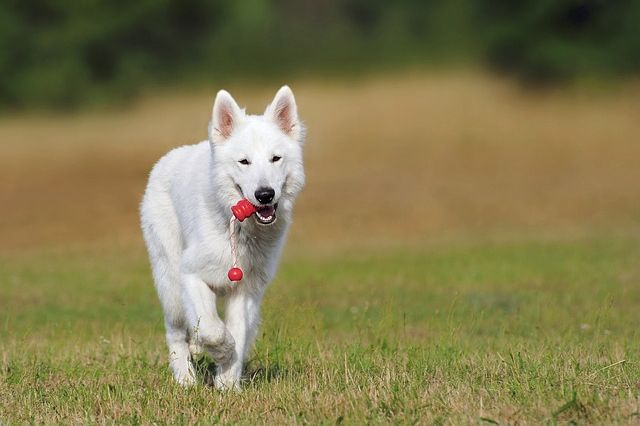 best-low-fat-dog-foods